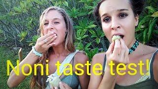 Noni Fruit Taste
