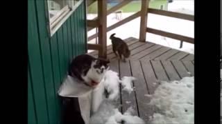 Soğuk Havada Evine Gelen Sevimli Hayvanlar   Tilki Kartal Kedi