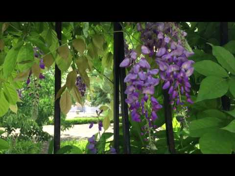 Greece In Summer - nature sounds for sleep