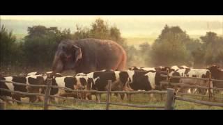 Фильм «Слон». Бодхи.