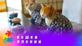 Документальный фильм о жизни мимимишных четвероногих в Стране восходящего солнца. Кошки Японии, 5