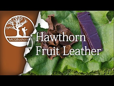 Bushcraft Foraging: Hawthorn Fruit Leather