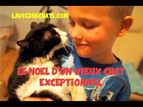 Le Noel D'un Vieux Chat 🐱 Exceptionnel