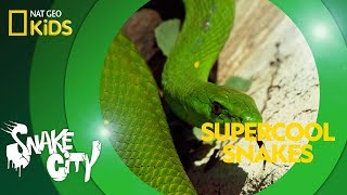 Supercool Snakes Snake City Youtube