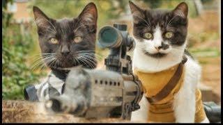 Коты против зомби!(Прикол)