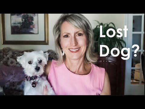 WHAT TO DO WHEN YOU FIND A LOST DOG!