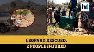 Watch: Leopard caught in wire mesh rescued, two people injured