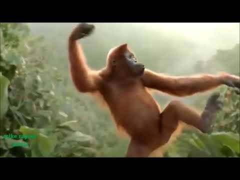 Bade kaam ka bander monkey dancing