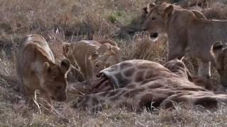 Masai Mara, Great Plains