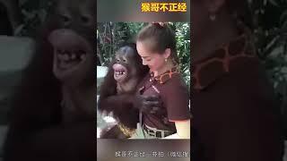 Download Video Monyet nakal MP3 3GP MP4