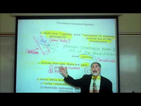 INFLAMMATION, FEVER & ANTI-PYRETICS by Professor Fink