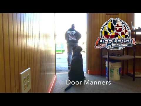 Best Labador Dog Trainers  Off Leash K9 Training Maryland\DC