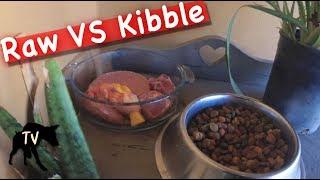 Dog Kibble Vs Raw Diet Challenge