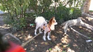 Какие собаки живут в квартирах Аликанте