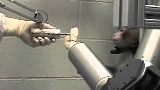 Brain machine interface: monkey controls 4DOF robot arm