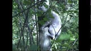 Вышел Васька погулять.Кот в лесу.