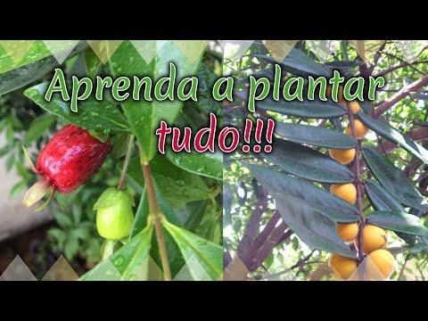 COMO PLANTAR CABELUDINHA E CEREJA DO RIO GRANDE from YouTube · Duration:  4 minutes 15 seconds