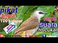 Pikat Ampuh  Berhasil  Mp3 - Mp4 Download