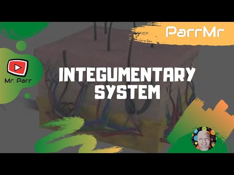 Integumentary System Song - YouTube