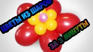 Как сделать  цветы из шаров. Master Class. Flowers from balloons.