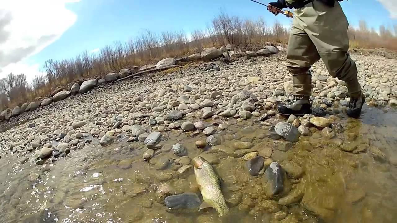 Dubois wyoming fly fishing report april may 2013 wind for Fishing in the wind