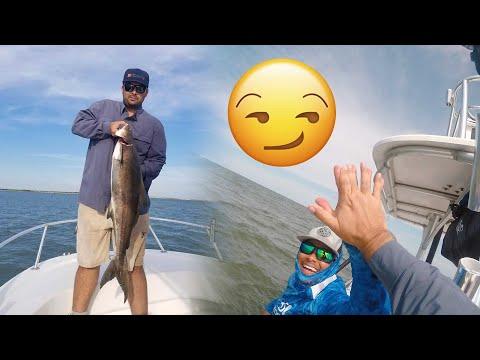 Virginia Cobia Fishing - Chesapeake Bay