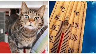 Shelter races to keep cats cool after lightning destroys AC right before heatwave