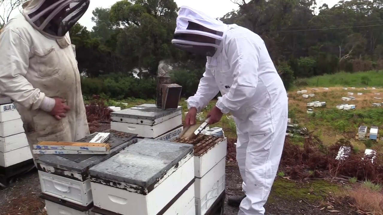 How to breed bees 48