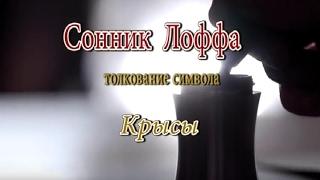 видео К чему снятся крысы Сонник
