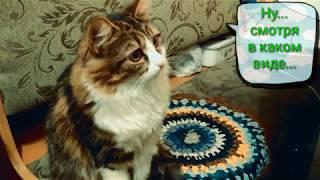 Почему кошки загребают еду