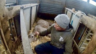 CALF DOWN!! WHY HAS IT BLOWN UP?