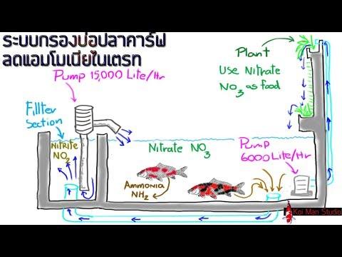 การออกแบบระบบกรองบ่อปลาคราฟ เพื่อลดแอมโมเนีย & ไนเตรท