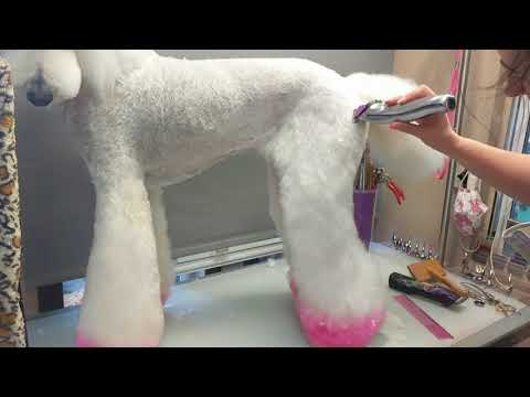 How to set in flared legs on st poodle. By Joanne Parker