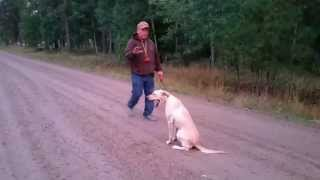 Started Dog Training Jewel Part 4 Retractable Lead