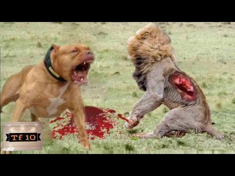 Top 10 aggressive Dog Breeds. Must watch