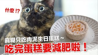 麻糊生日蛋糕-真的是杯子的杯子蛋糕-貓副食食譜-好味貓鮮食廚房ep144