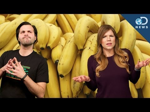 Why Are Bananas Going Extinct?