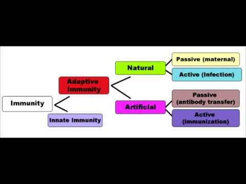 Immunology Full Video - USMLE Step 1