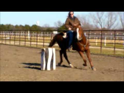 Sorrel Gelding Barrel and Head Horse