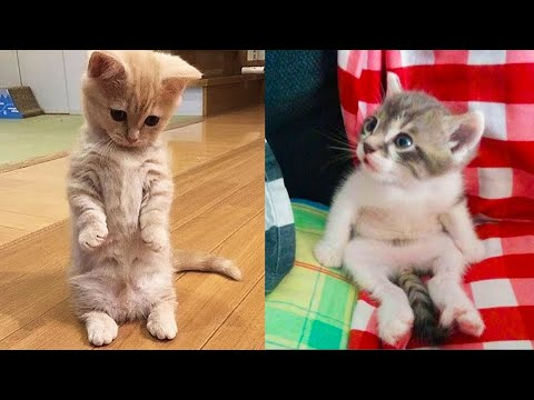 Baby Cats - Cute and Funny Cat Videos Compilation #17 | Aww Animals