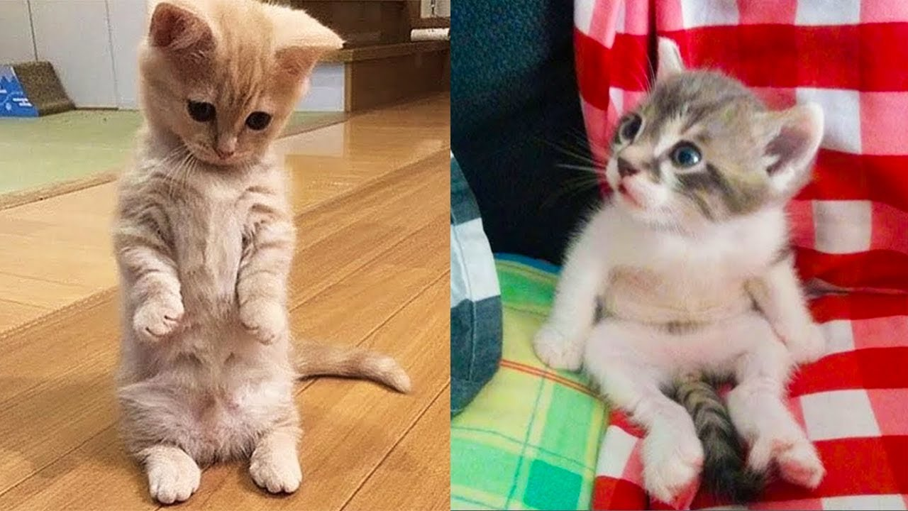Funny cats videos compilation by Aww Animals