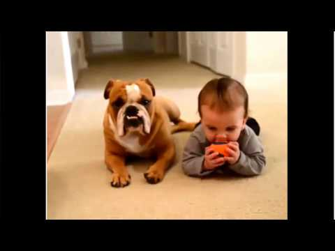 babies playing with pets