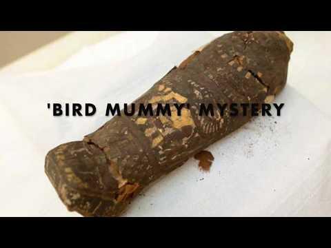 Un escáner muestra que una momia egipcia de halcón no es nada de lo que se creía
