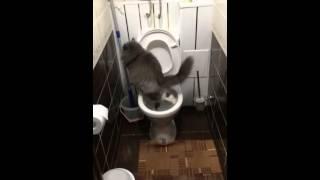 Вот так гадят интеллигентные коты