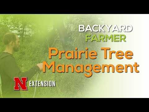 Prairie Tree Management