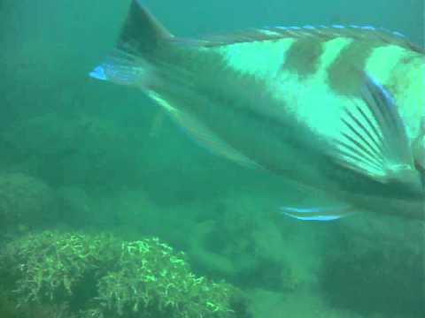 Whitsundays Diving, Atlantic Clipper