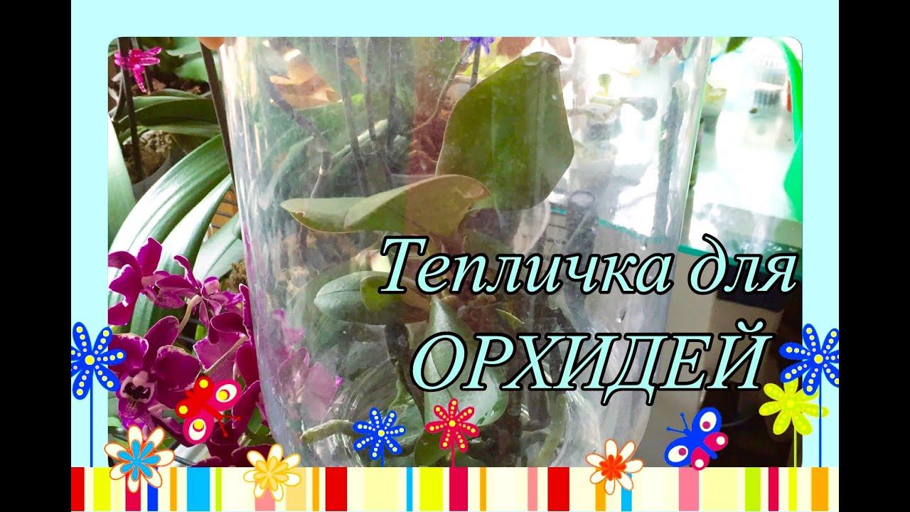 Тепличка для орхидеи своими руками фото 120