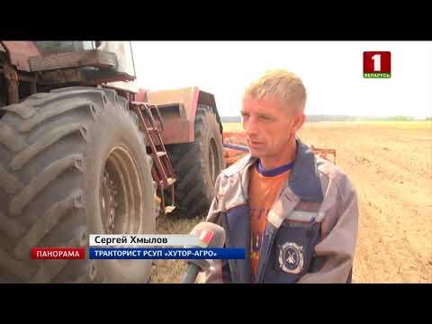 На юго-востоке Беларуси засуха медленно убивает посевы. Панорама