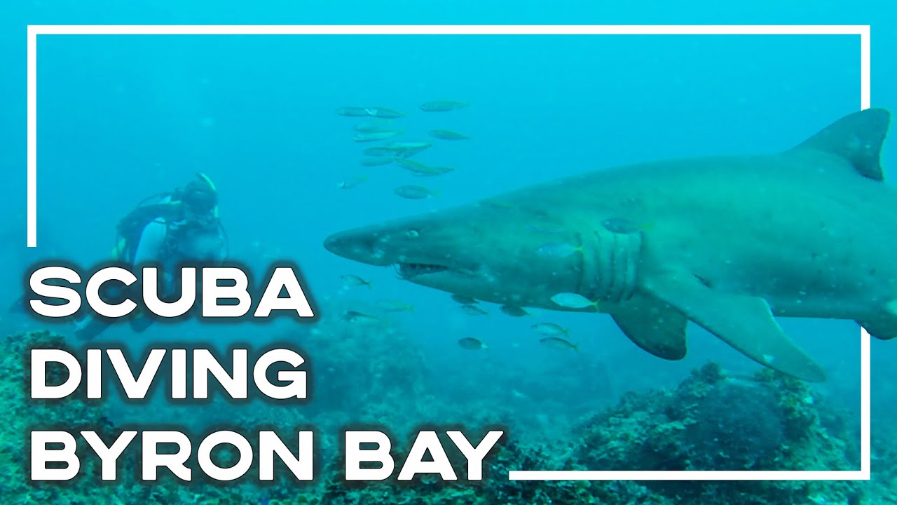 Scuba diving with sharks in byron bay australia - Dive byron bay ...