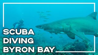 Scuba Diving With Sharks In Byron Bay, Australia - Backpacker Banter